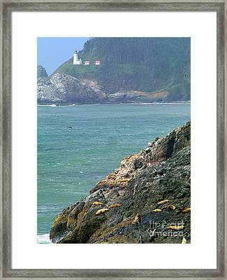 Light House And Sea Lions Framed Print by Nick Gustafson