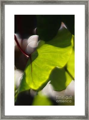 Light I Framed Print by Katherine Morgan