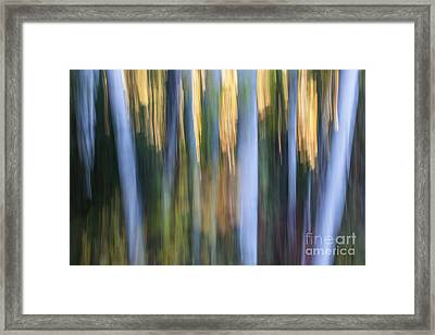 Light In Evening Forest Framed Print