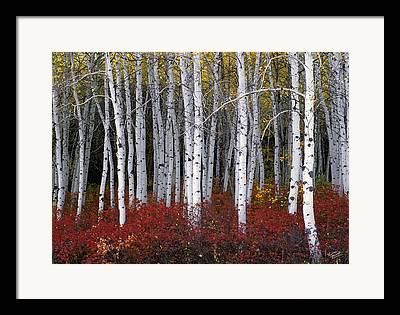 Autumn Trees Framed Prints
