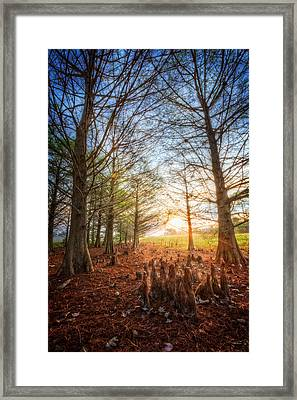 Light In The Cypress Trees II Framed Print