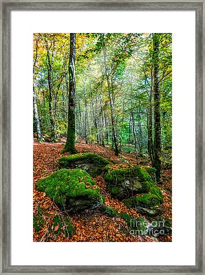 Light In The Forest Framed Print by Adrian Evans