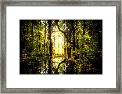 Light In The Forest Framed Print by Bob Orsillo