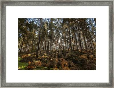 Light In The Forest Paint Framed Print by Scott Carruthers