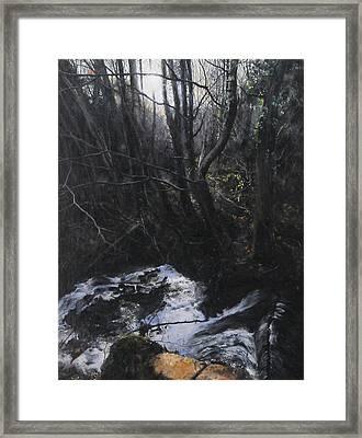 Light In The Woods Framed Print