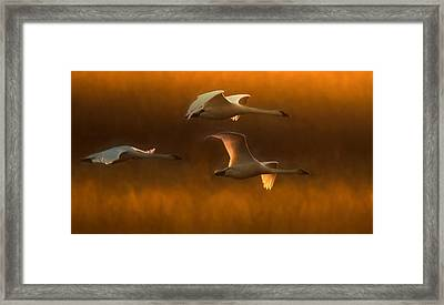 Framed Print featuring the painting Light by Kelly Marquardt
