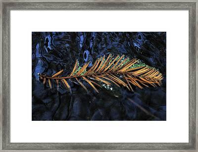 Light Music  Framed Print by Deborah Gallaway