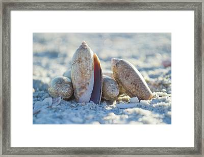 Framed Print featuring the photograph Light. Nature. Passion. by Melanie Moraga