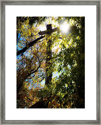 Light Of Day  Framed Print by Brittany H