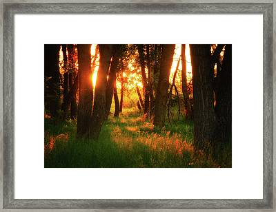 Framed Print featuring the photograph Light Of The Forest II by John De Bord