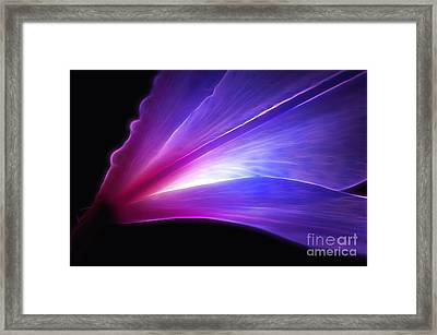 Light Of The Lily Framed Print by Krissy Katsimbras