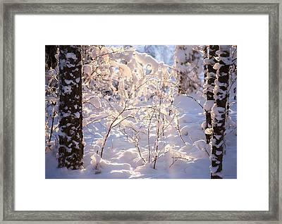 Light Of Winter Framed Print by Rose-Maries Pictures