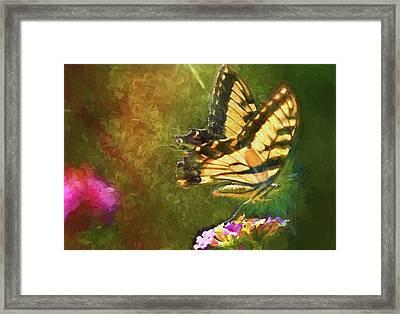 Light On Beauty Framed Print