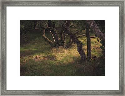 Light On The Ground Framed Print