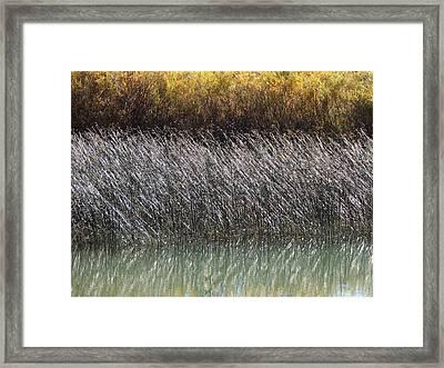 Light On The Pond Framed Print