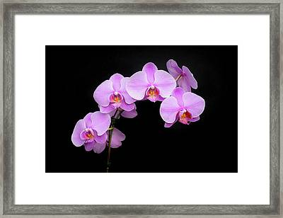Light On The Purple Please Framed Print
