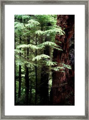 Light On Trees Framed Print