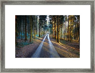 Light Path Crossing In The Woods Framed Print