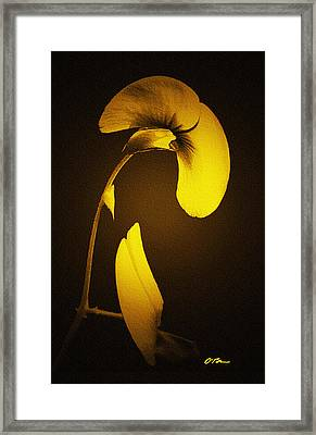 Light Persuasion Framed Print by Claudia O'Brien