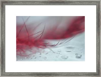 Light Pink Dream Framed Print by Jenny Rainbow