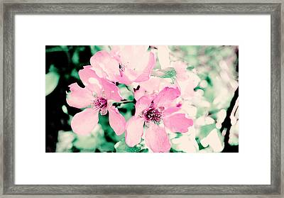 Light Pink Flowers Framed Print by Nat Air Craft