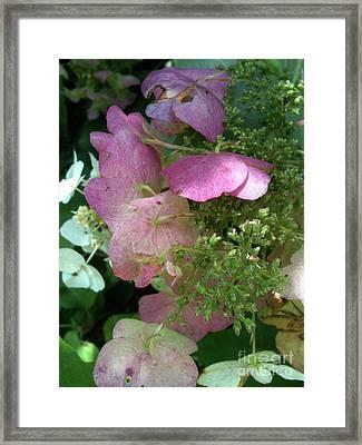 Light Pink Framed Print by Trish Hale