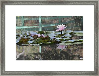 Light Pink Water Lily Framed Print by Linda Geiger