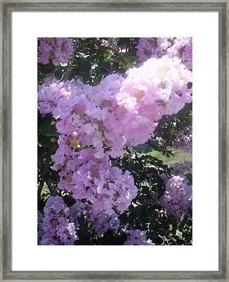 Light Purple Crape Myrtle Flowers Framed Print by Warren Thompson
