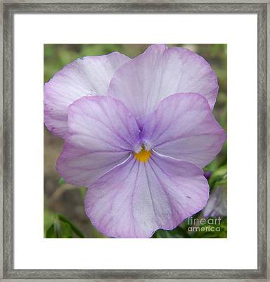 Spurred Anoda - Light Purple Tones Framed Print