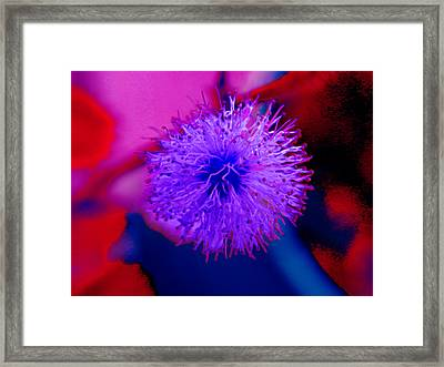 Light Purple Puff Explosion Framed Print by Samantha Thome