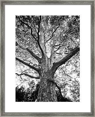 Framed Print featuring the photograph Light, Shadows And Texture by Karen Stahlros