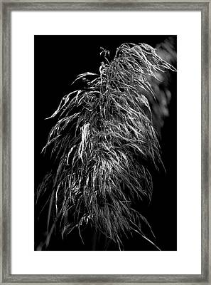 Framed Print featuring the photograph Light Shadows by Eric Christopher Jackson