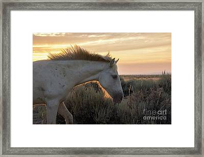 Light Shining Through Framed Print by Nicole Markmann Nelson