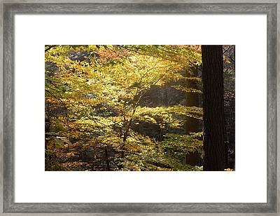 Framed Print featuring the photograph Light In The Leaves by Kirkodd Photography Of New England