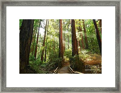 Light The Way - Redwood Forest Of Muir Woods National Monument With Sun Beam. Framed Print