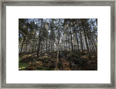 Light Through The Trees Framed Print by Scott Carruthers