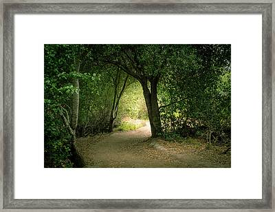 Light Through The Tree Tunnel Framed Print