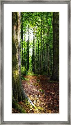 Light Through The Trees Framed Print by Meirion Matthias