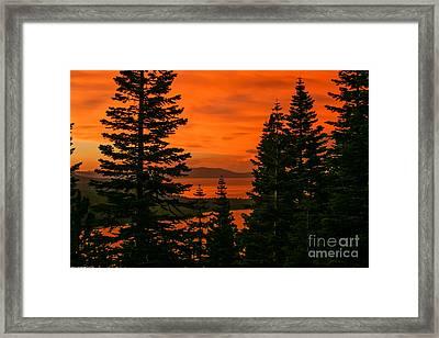 Light Through The Trees Framed Print
