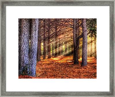 Light Thru The Trees Framed Print by Sumoflam Photography