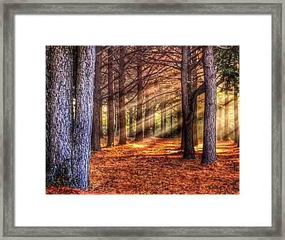 Light Thru The Trees Framed Print