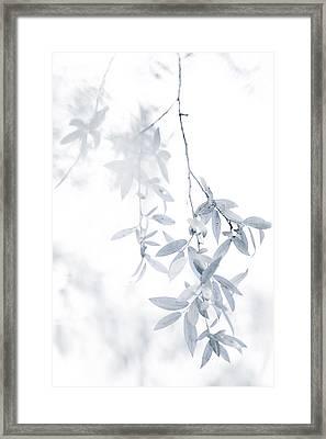 Light Touch Framed Print