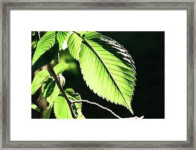 Light Up Leaf Framed Print by Jonathan Michael Bowman