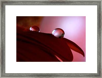 Light Water Drop On Dark Petals Framed Print