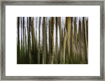Light Within The Forest Framed Print