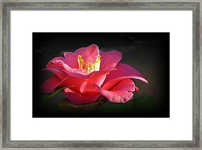 Framed Print featuring the photograph Lighted Camellia by AJ Schibig