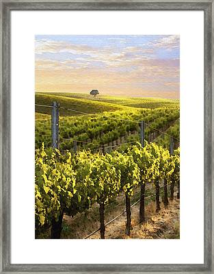 Lighted Vineyard Framed Print by Sharon Foster