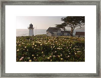 Lighthouse With A Blanket Of Wildflowers Framed Print by George Oze