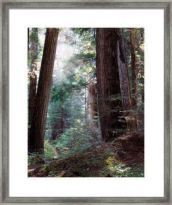 Lighting The Path Framed Print by Leland D Howard