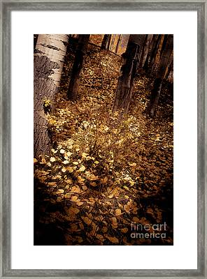 Framed Print featuring the photograph Lighting The Way by The Forests Edge Photography - Diane Sandoval